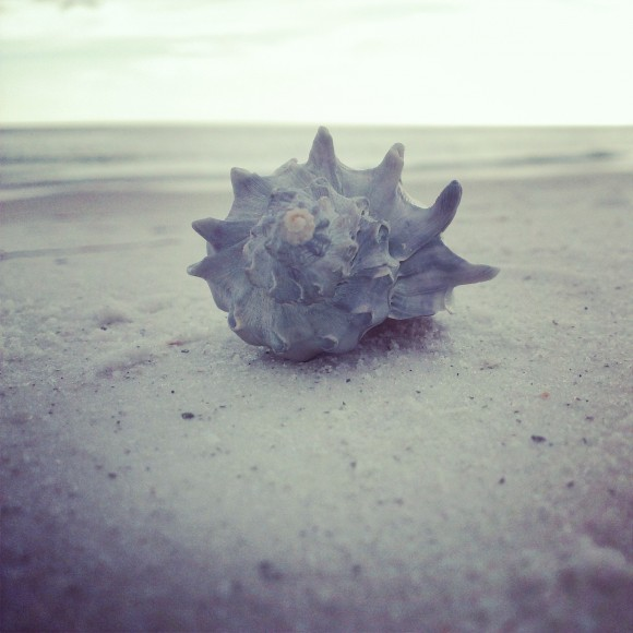 Shell on Beach by Casey Simmons
